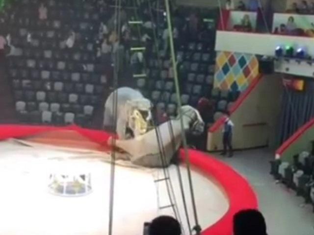 «Типично женская разборка»: в российском цирке слонихи подрались во время представления