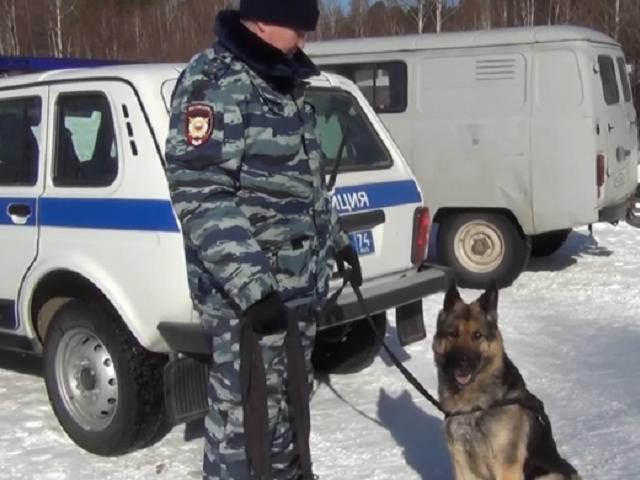 В Челябинской области собака помогла найти угнанные квадроциклы