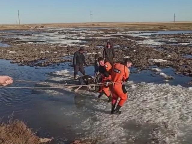 В Челябинской области спасли провалившегося в полынью теленка