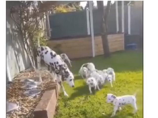 «Дайте мне покоя!»: убегающая от собственных щенков собака рассмешила Сеть