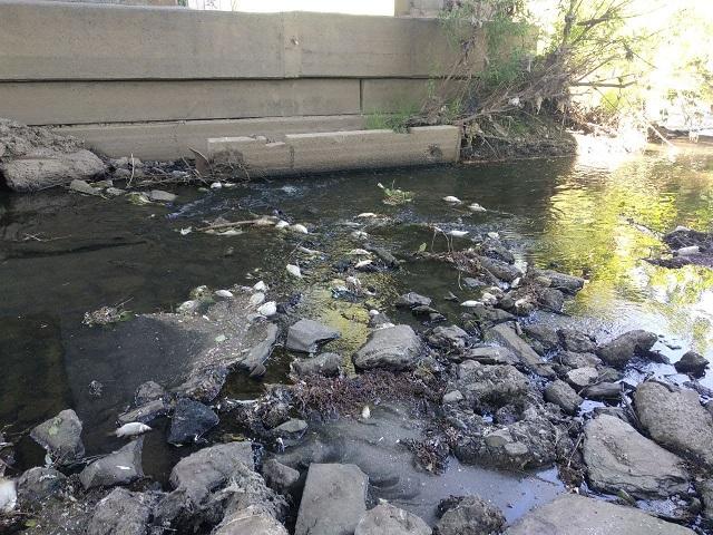 В Челябинской области на берегу реки обнаружили массовый замор рыбы