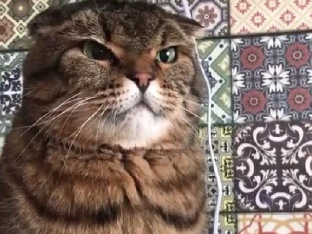 Сердитый кот стал звездой Сети