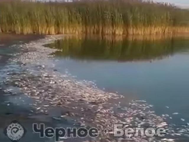 В Челябинской области проверят озеро, в котором массово гибнет рыба