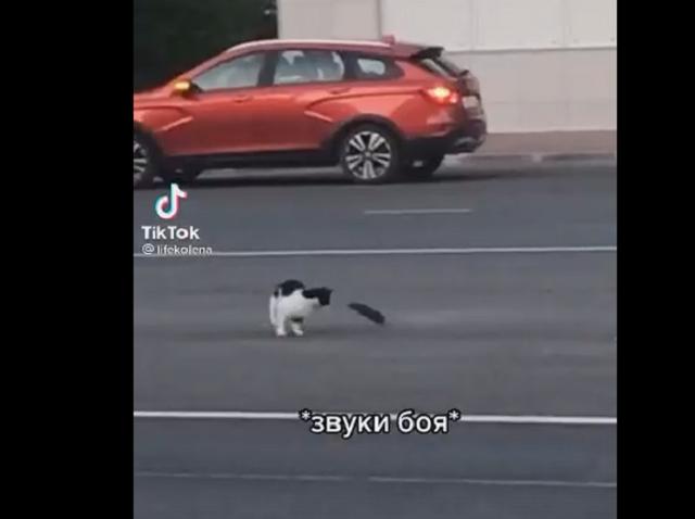 Уличный бой кота с крысой рассмешил пользователей Интернета
