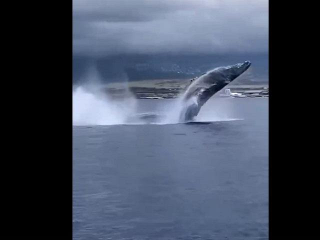 Танец китов восхитил пользователей Интернета