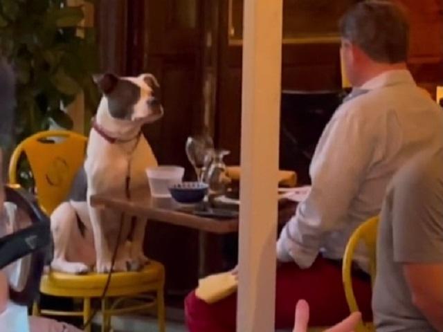 Пес, поужинавший в ресторане, стал звездой соцсети