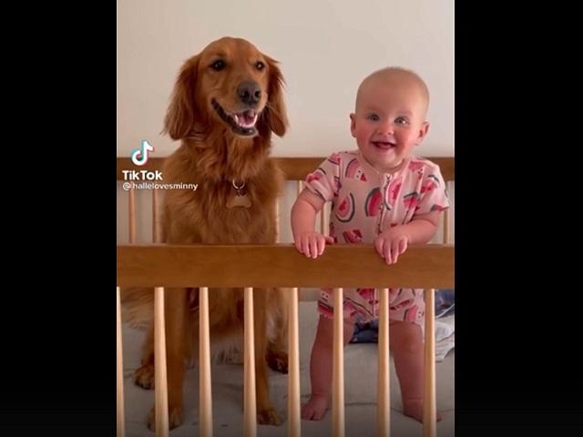 Дружба младенца и собаки растрогала пользователей Сети