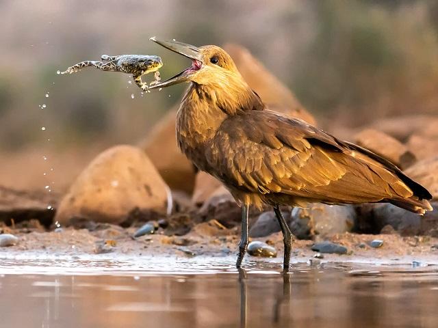 ТОП удивительных фото птиц: назван победитель международного конкурса