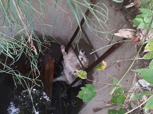 На Южном Урале спасли пса, упавшего в колодец