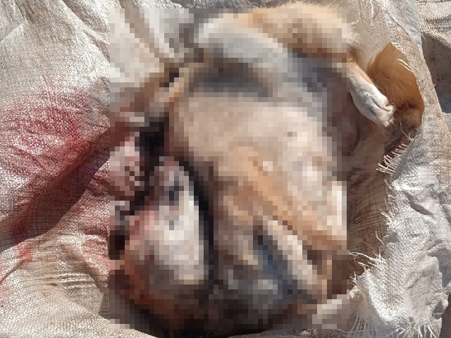 В Челябинской области обнаружили изуродованный труп в мусорном баке