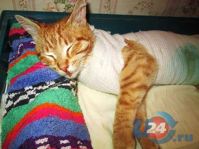 Озёрский маньяк продолжает мучить городских котов