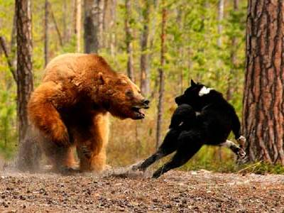Ашинские охотники: на медведя мы, друзья, выйдем без испуга