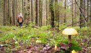 Три поисково-спасательных отряда ведут поиски пропавшей грибницы