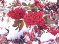 Погода на Южном Урале в последний день осени будет пасмурной