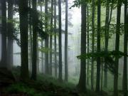 В лесу обнаружен повешенный человек