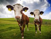 Штраф-стоянка для домашнего скота