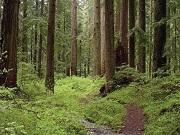 В лесу под Златоустом найден скелет мужчины