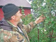 На берегу озера Чебаркуль зацвела яблоня
