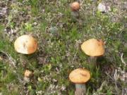 В Златоусте 78-летний грибник всю ночью провел в лесу. По дороге домой урожай пришлось бросить