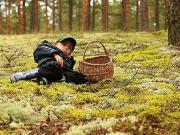 Организованного отдыха в лесах не будет?