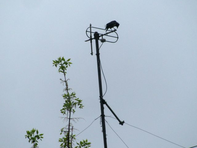 ВЧелябинской области вороны напали налюдей